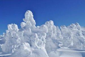 八甲田山の樹氷