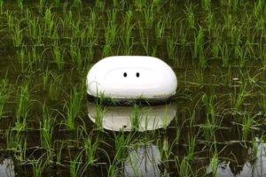 智慧耕农!日本研发「鸭子机器人」 助农民清除稻田杂草
