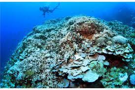 7月零台海水升温日本专家忧冲绳珊瑚白化