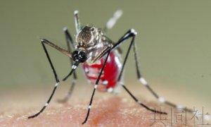 日本呼吁警惕登革热媒介埃及伊蚊定居 或在机场越冬