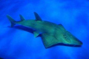 太荒谬!水族馆展出认错20年专家鉴定惊呼「新品种有绝种危机」