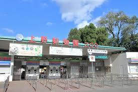 上野动物园新大熊猫馆9月8日开放 再现四川山林景观