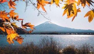 富士山绝景「河口湖」 :享受温泉旅馆,朝圣逆富士!