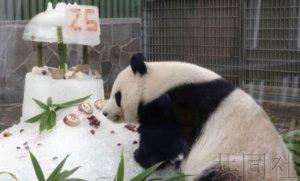 """神户动物园为大熊猫""""旦旦""""庆祝25岁生日"""