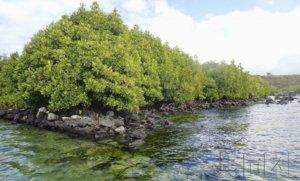 聚焦:燃油泄漏事故给毛里求斯带来长期负面影响