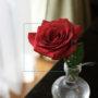 撮影するだけで花や植物の名前がわかる無料アプリ「GreenSnap」【連載:アキラの着目】