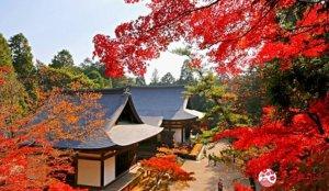 红叶圣地「高雄」:参访禅寺神护寺、夏天避暑、秋天赏红叶