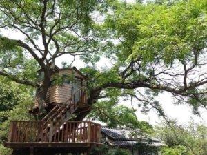 令人憧憬的树屋,让你忘却时间的存在