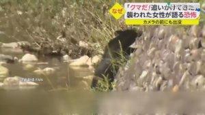 饿到不怕人! 日新泻县9天7人遭熊袭