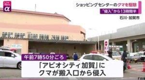"""日本一商场遭熊""""入侵""""超13小时 防暴警察出动"""