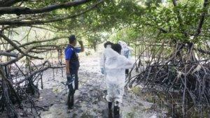 专家建议长期监测燃油对毛里求斯红树林的影响