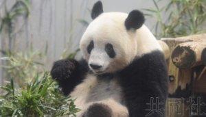 东京都与中方磋商延长大熊猫夫妇租赁期