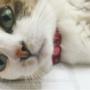 日本养猫艺人大公开!土屋安娜、北川景子.....还有很多很多~原来他们都是猫奴!