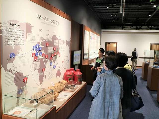 ふじのくに茶の都ミュージアムのエデュケーターが常設展示の見どころを分かりやすく解説してくれるミュージアムガイドツアー ふじのくに茶の都ミュージアム公式サイトから引用